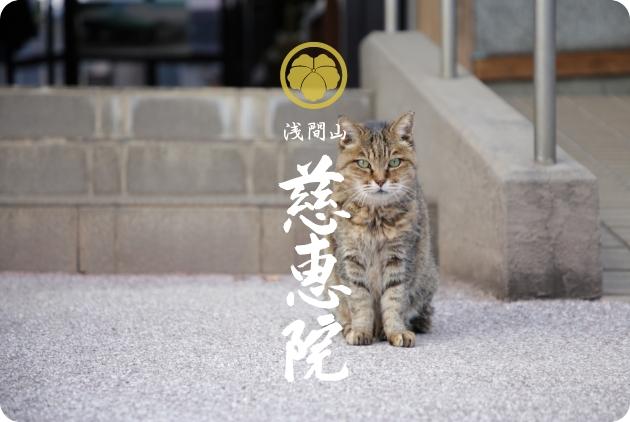 本日・2021年5月11日(火)深夜0時放送 テレビ東京「チマタの噺」にて当院が紹介されます。