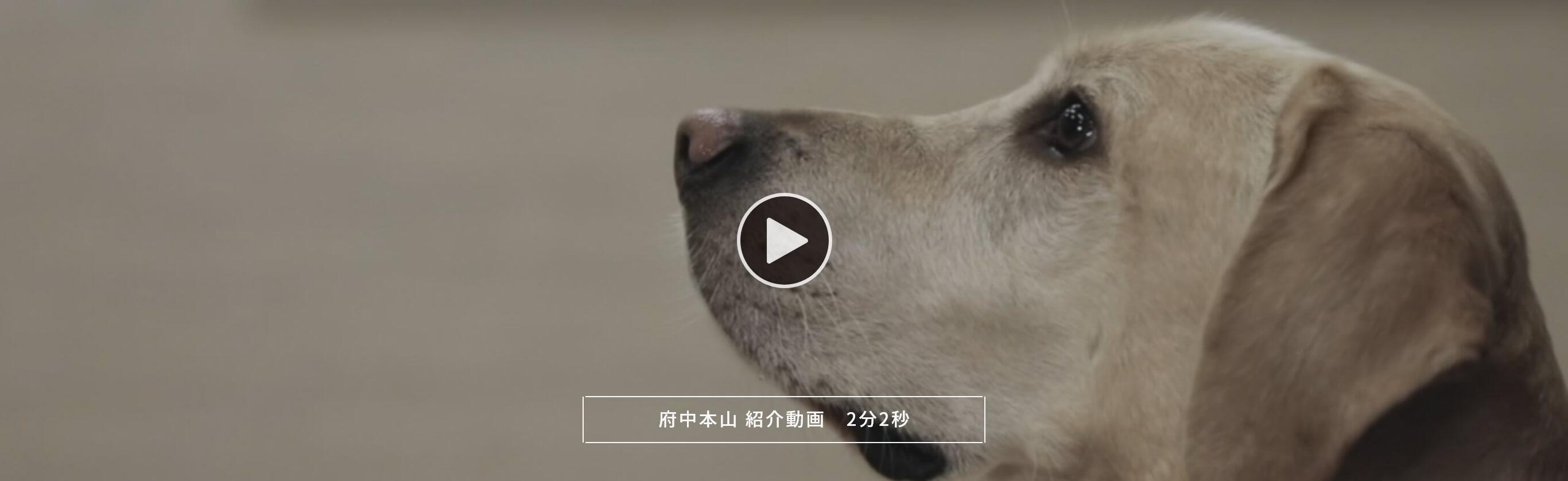 府中本山 紹介動画 2分2秒