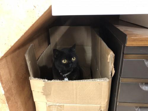 慈恵院の猫ぷりん
