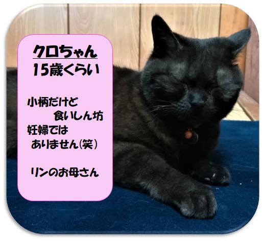慈恵院の保護猫のクロちゃん