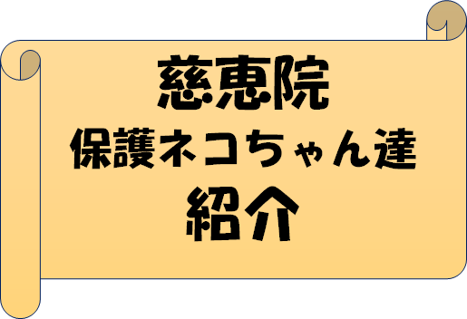 慈恵院の保護猫ちゃん達紹介