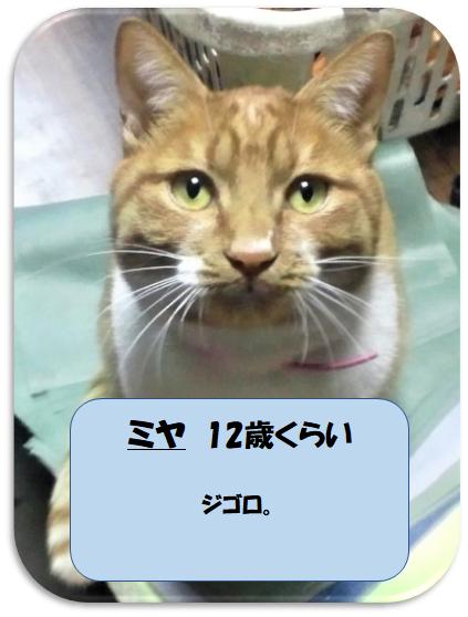 慈恵院の保護猫のミヤ