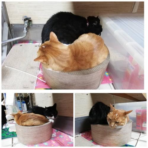 慈恵院の温まる猫