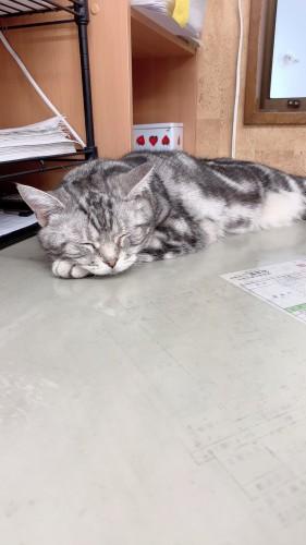 慈恵院 お昼寝中の猫ルナ