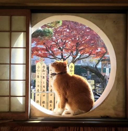 慈恵院の保護猫