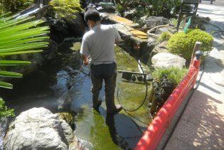 本堂前の池の定期清掃①
